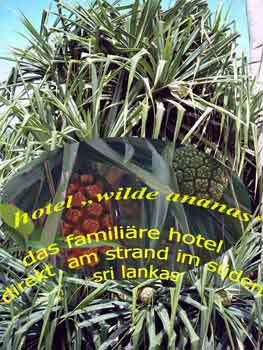 Schraubenpalme oder im Volksmund auch Wilde Ananas
