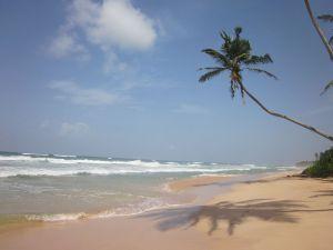 Palmen säumen den Strand beim Haus am Meer