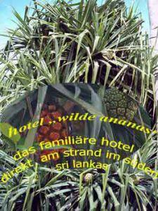 sri-lanka-logo-wilde ananas schraubenpalme
