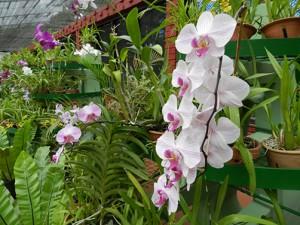 Sehenswert im Botanischen Garten Kandy: Das Orchideenhaus
