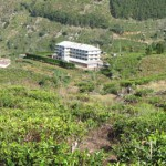 Mitten in den Teeplantagen: Teefabrik bei Ohiya