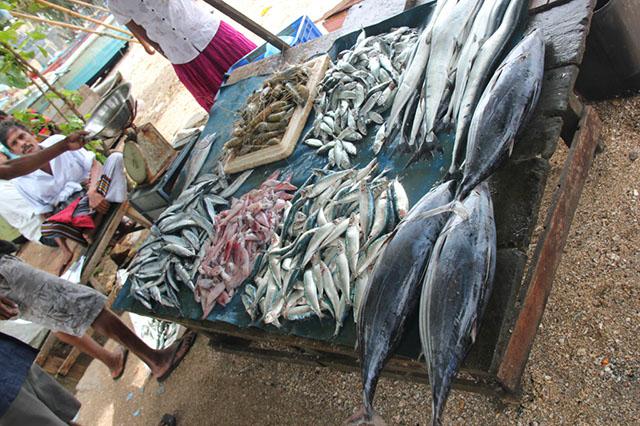 Stand am Fischmarkt in Galle Makrele Butterfisch Calamari Garnelen